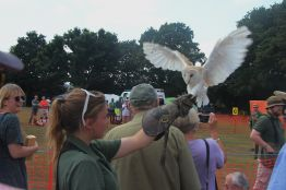 Haven Falconry